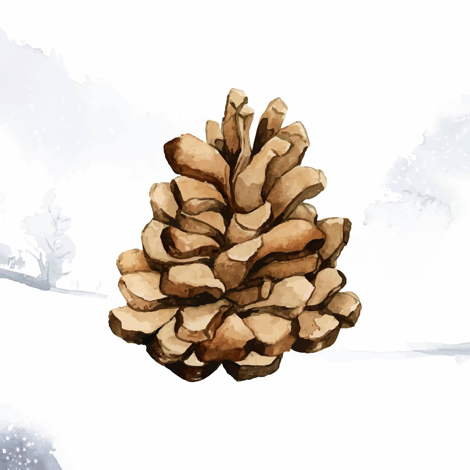 Pine Cone Painted By Watercolor Vector Free Download Vector CDR, AI, EPS and PNG Formats