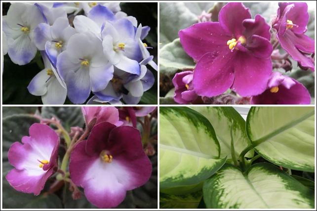 2017-02-23--24 Flowers1
