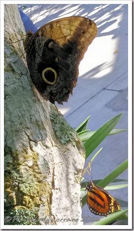 10-22-butterfly3