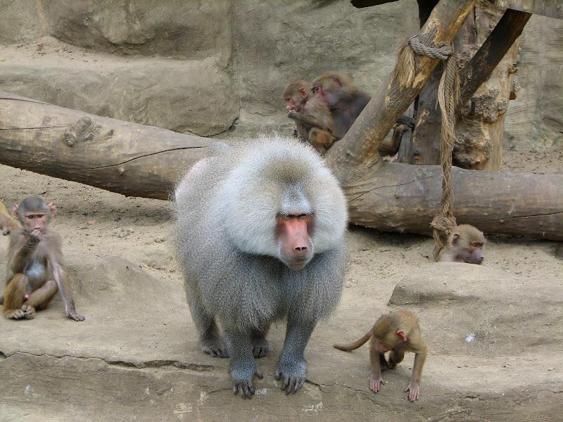 Warszawskie zoo - img_6247.jpg