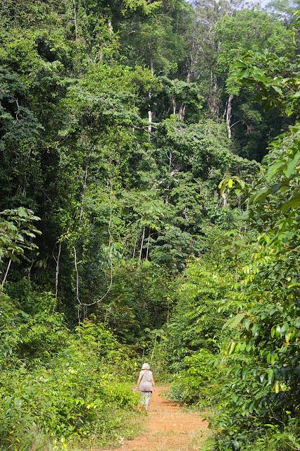 Prospection en forêt près de la Rivière Comté. 24 novembre 2011. Photo : J.-M. Gayman