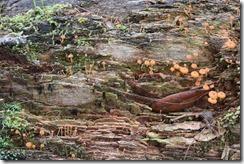 Mushroom colony-6