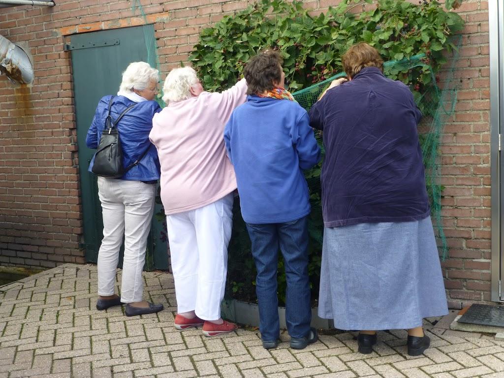 De VOC dames plukken bramen