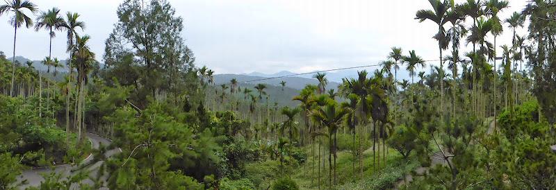 Puli, Nantou county, cueillette de thé - P1050561.JPG