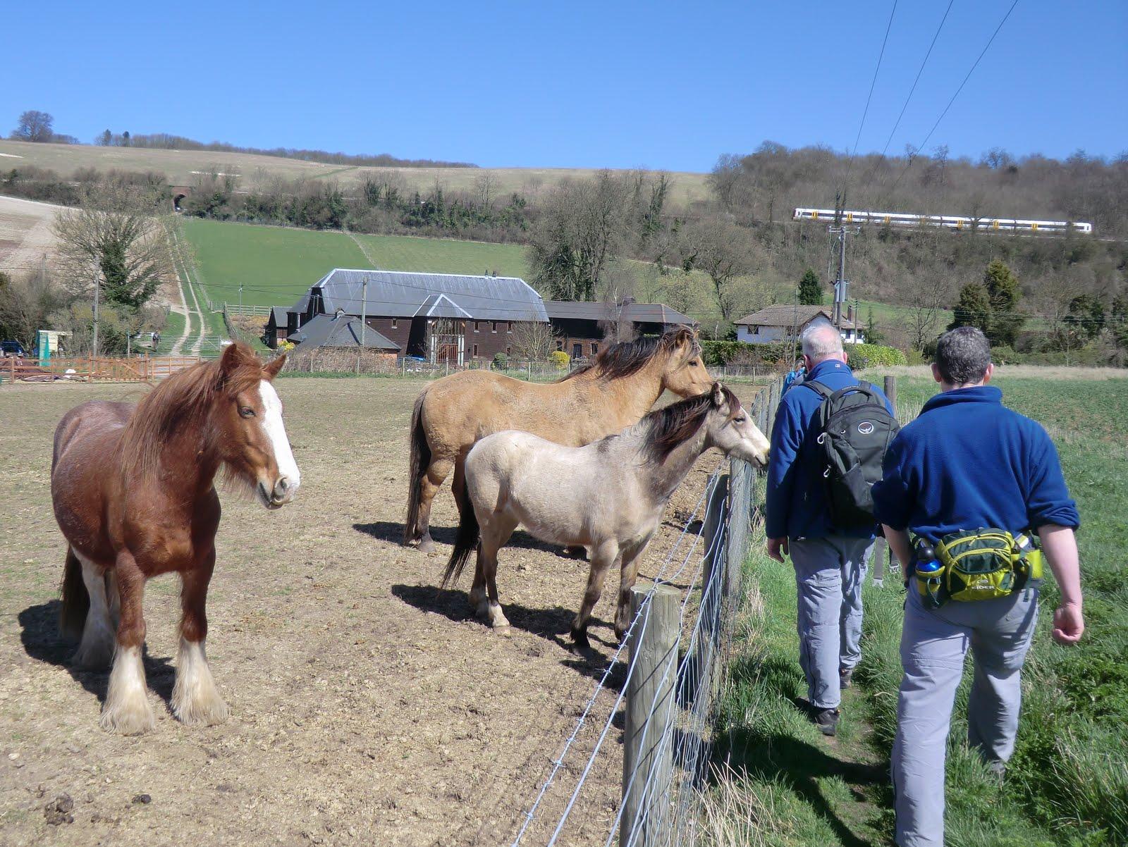 CIMG6277 Friendly horses at Lower Bush