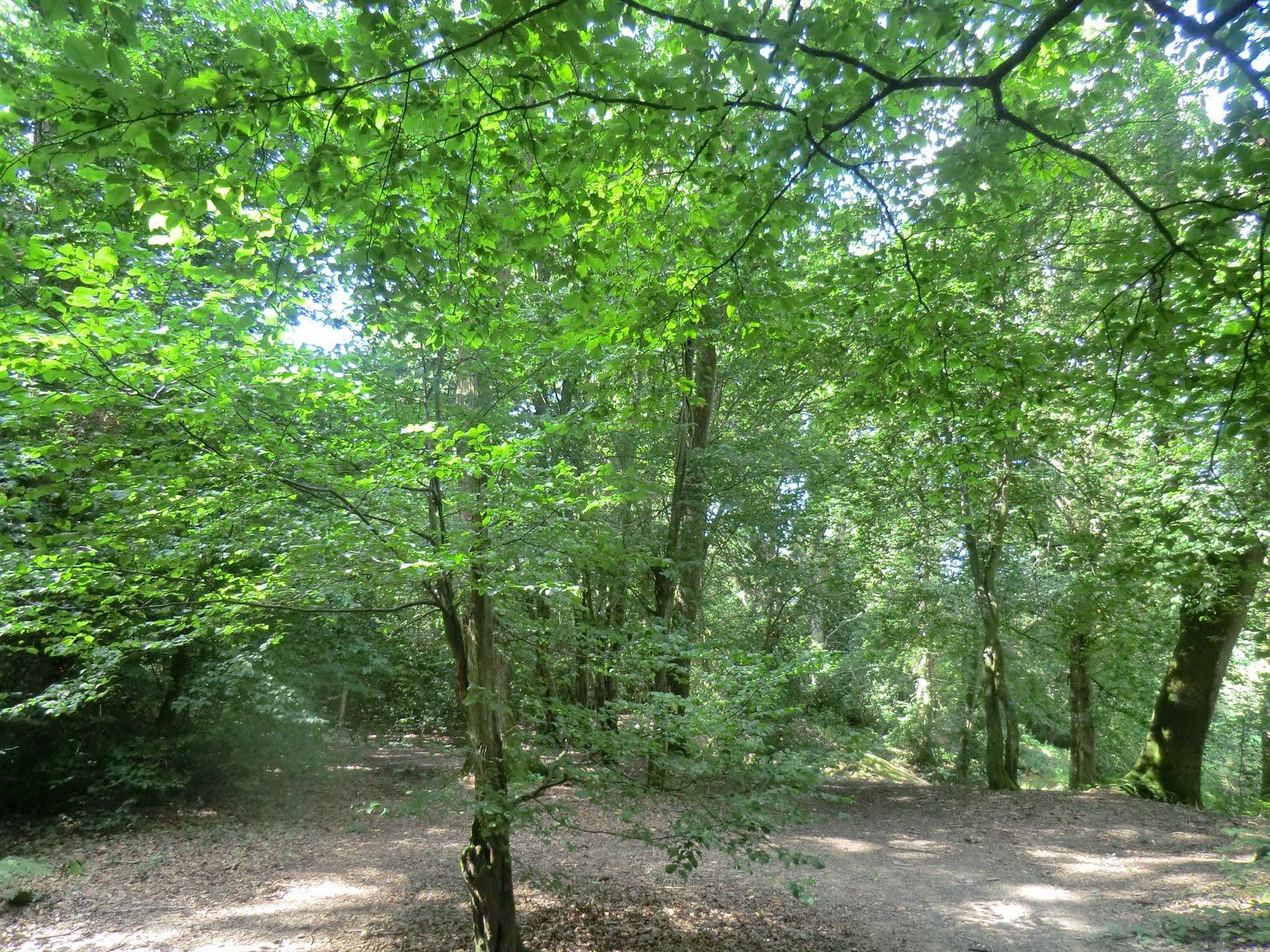 CIMG3884 Through a sun-dappled wood