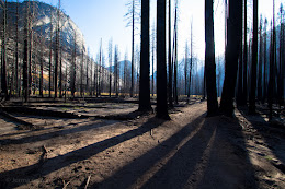 Sunrise in the newly burned out forest in Little Yosemite Valley