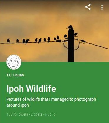 "My First Google+ Collection: ""Ipoh Wildlife"""