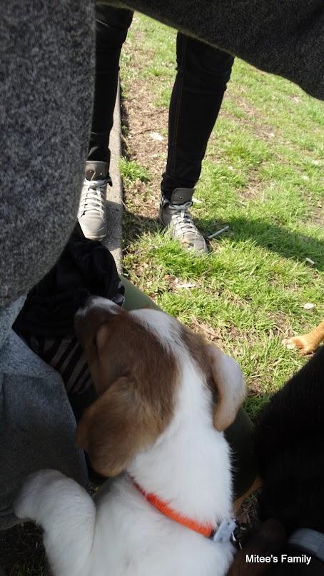 Balades canines en Nord (59)/Pas de Calais (62) - Boulogne-sur-Mer, Calais et Lille - Page 4 DSC01789