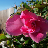 Gardening 2013 - 115_5450.JPG