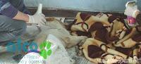 Asistiendo a las esterilizadas luego de la operación.