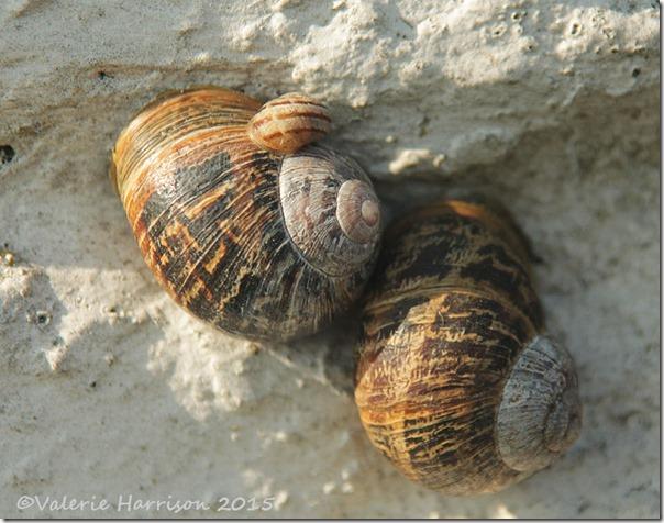 10-snails