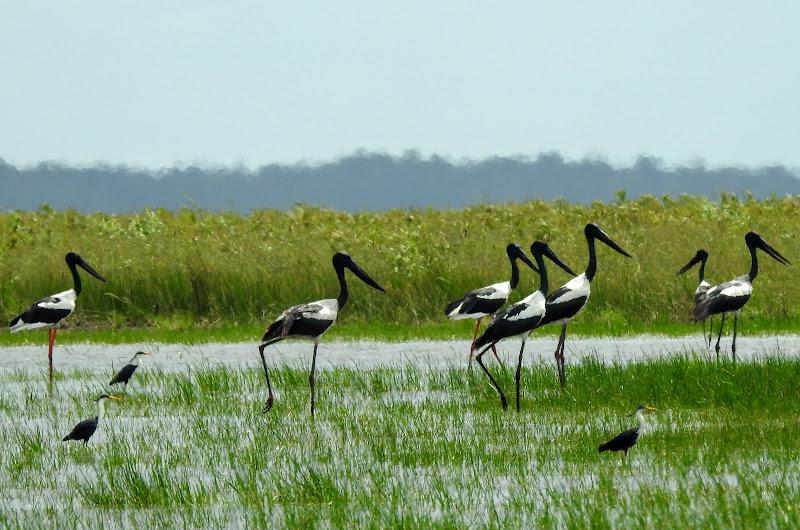Wildlife & Eco Tours