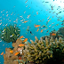 Thailand has banned coral-damaging sunscreens   Thailand Latest news 2021