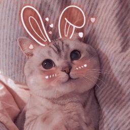user Ameneh Ganjizadeh apkdeer profile image
