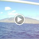Hawaii Day 7 - hFpjagXJI6Wmxn7NN5iAfLMulL7NtGhHUSdYC3_duOFVzQfE8x-1op7bKJZZr4ol9-udyqsxE9U=m18