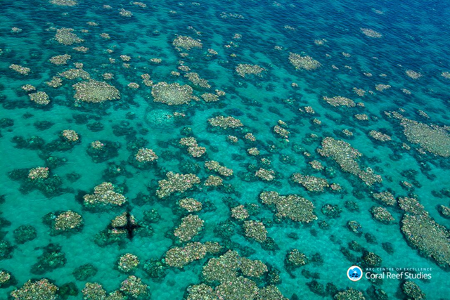 Aerial view of widespread coral bleaching on the Great Barrier Reef, taken in March 2017. Photo: ARC Centre of Excellence for Coral Reef Studies