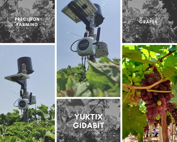 Yuktix GidaBit installed at Grape farm Karnataka