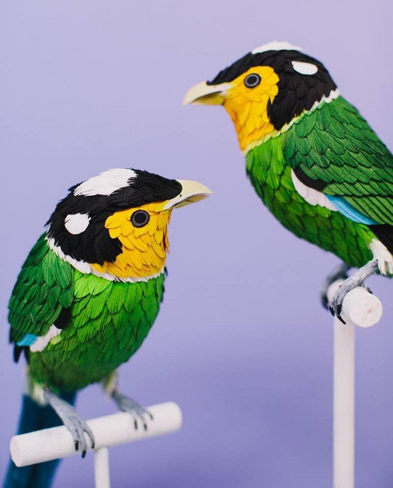 diana-beltran-herrera-birds-16