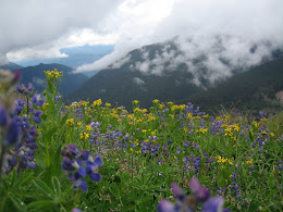 Off the glacier. Wildflowers on the Heliotrope trail.