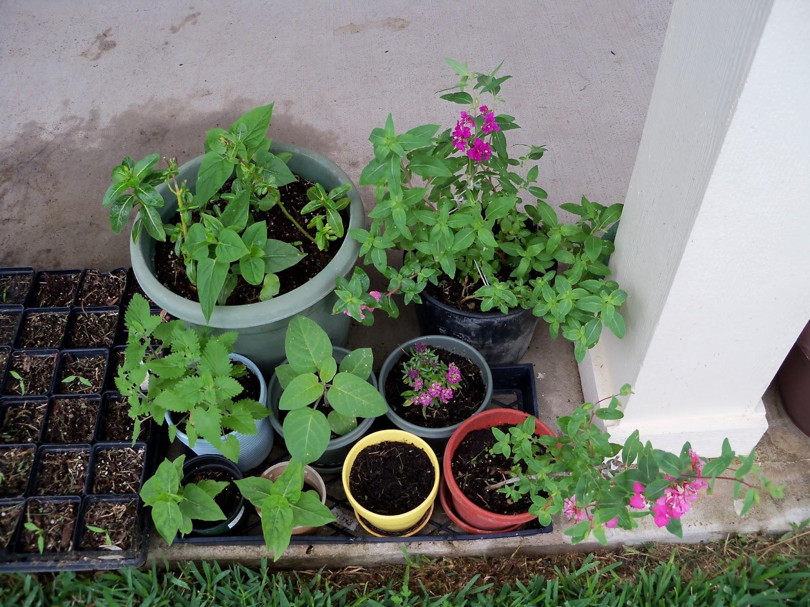 Gardening 2012 - 115_1408.JPG