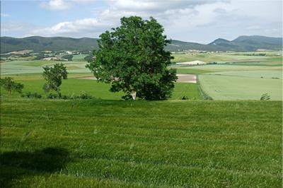 Campos de cultivo cerca de Antezana