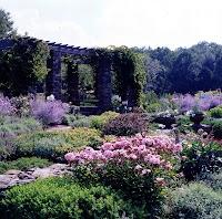 Early summer in a perennial garden in Rhinebeck, N.Y.