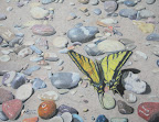 Butterfly Sunbather - Original Painting