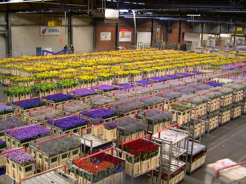 aalsmeer-flower-auction-2