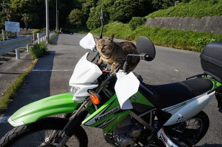 バイクに乗る猫