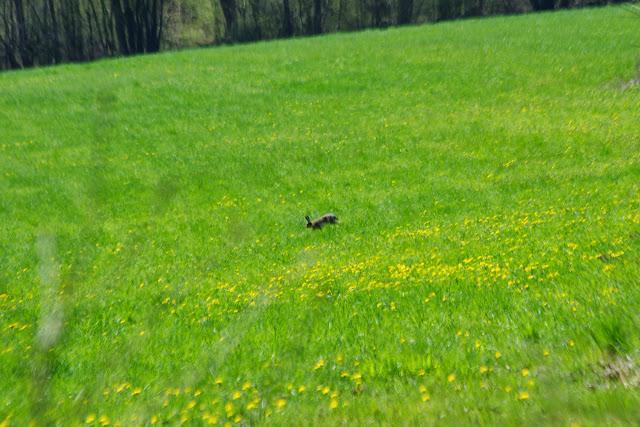 Les Hautes-Lisières (Rouvres, 28), 13 avril 2015. Photo : J.-M. Gayman