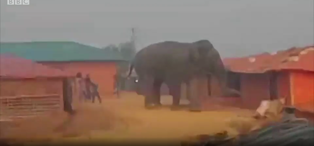Screenshot from a video showing elephants wrecking a Rohingya refugee camp in Bangladesh, 4 May 2018. Photo: Justin Rowlatt and Sanjay Ganguly