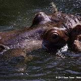 04-07-12 Homosassa Springs State Park - IMGP4531.JPG