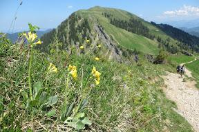 Hochgrat Naturpark Nagelfluhkette Scheidwangalpe