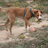 Lucy - Rehomed UK