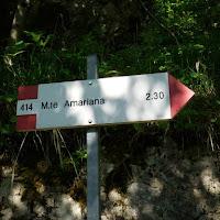 Amariana