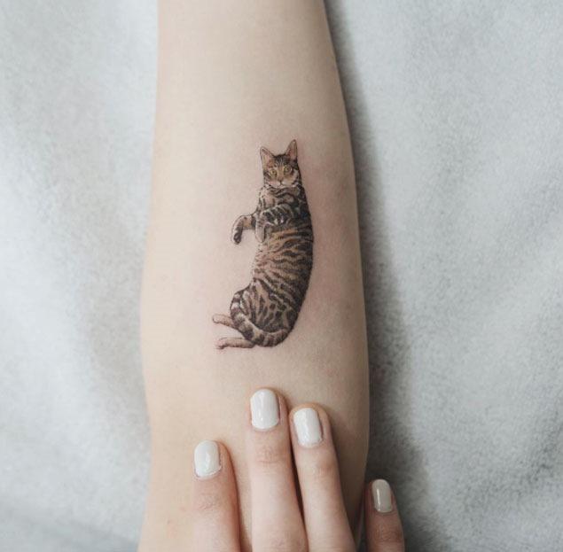Esta comprometida gato