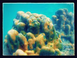 family trip pulau harapan, 1-2 agustus 2015 gopro 01-EFFECTS