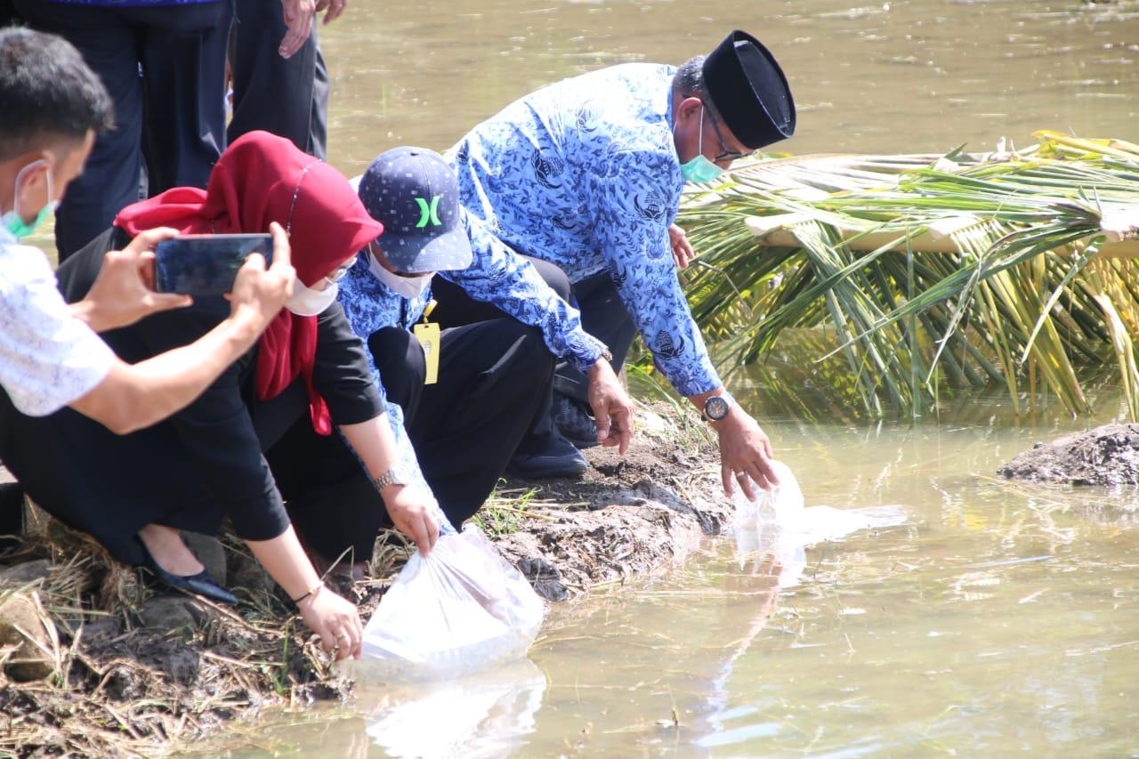 Bupati dan Wakil Bupati Soppeng Lakukan Pelepasan Ikan dan Itik Dilingkungan Persawahan BPP Liliriaja
