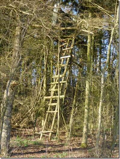 5 tree house seen in calcutt farm wood