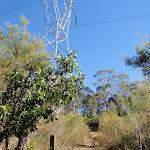 track winding below powerlines (58397)
