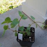 Gardening 2010 - 101_0205.JPG