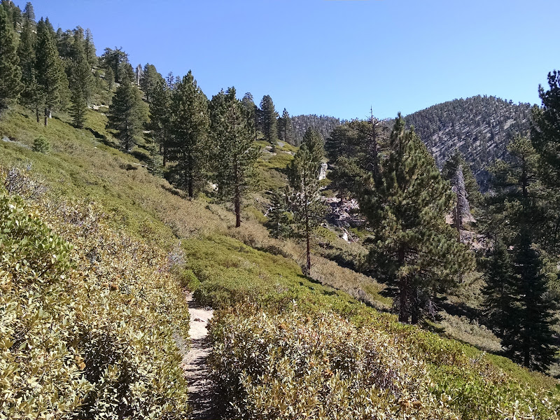 Mount San Gorgonio • Vivian Creek Trail