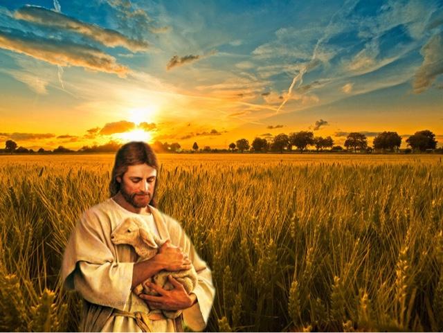 在曠野遇見神: 羊要尋找好牧人