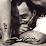 Mo'o Tatau's profile photo