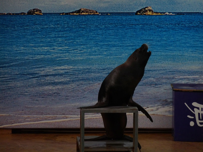 Gu Lang Yu Parc océanographique qui n'en a que le nom...