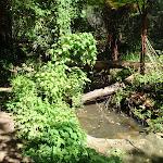 Top of Moores Creek (136261)