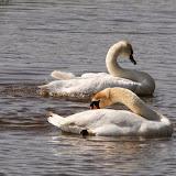Vogels en dieren - IMG_6285.JPG