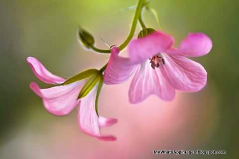 very Beautiful Flower Pictures