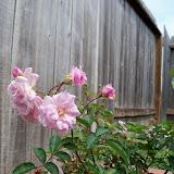 Gardening 2010 - 101_1063.JPG